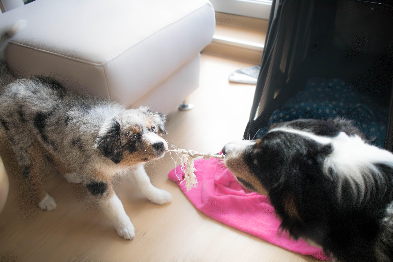 Hundeblog_dogsoulmate20181-259