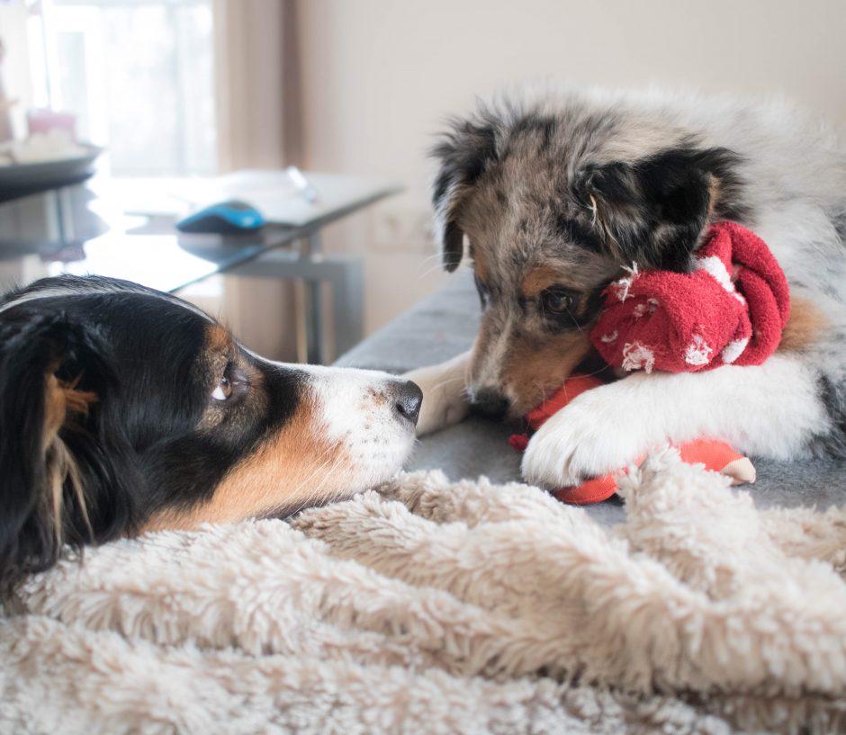 Wurm Und Hund