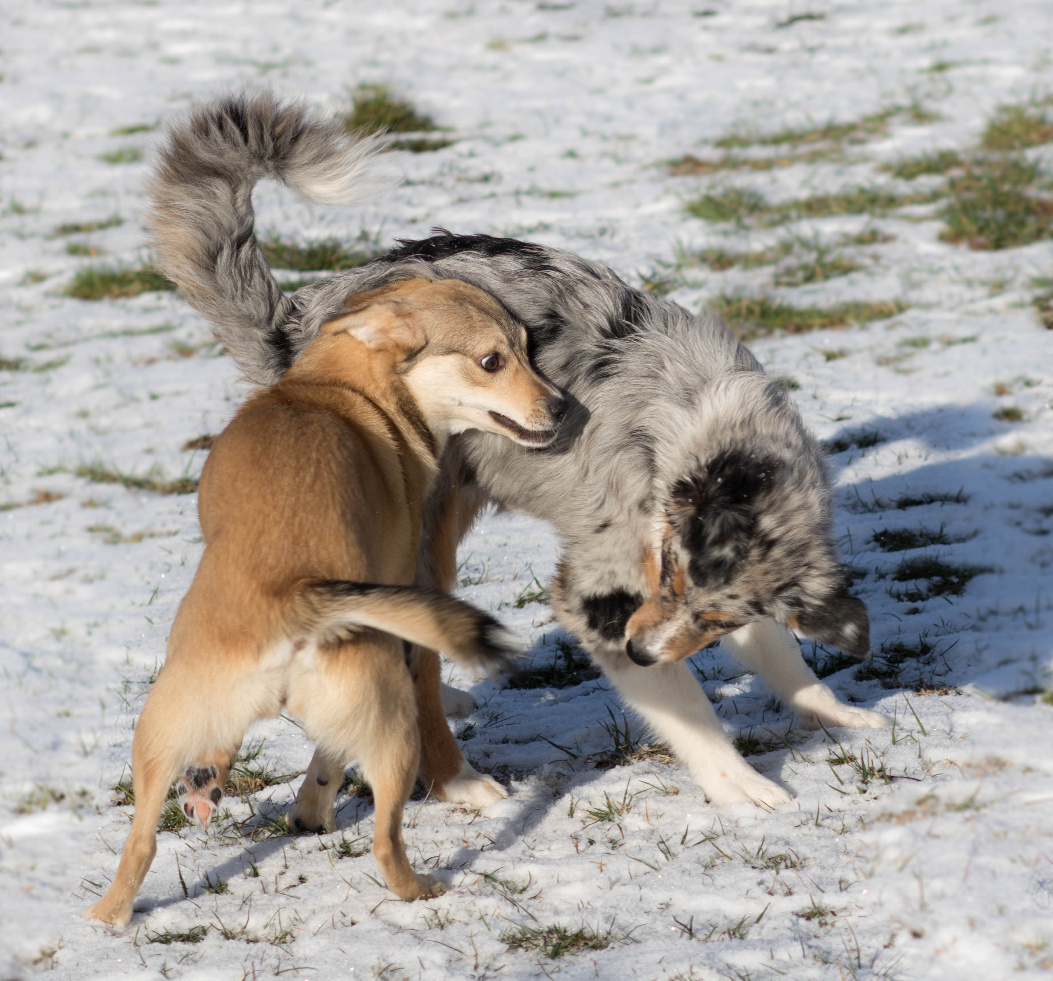 Hundeblog_dogsoulmate_welpenschule20191-53