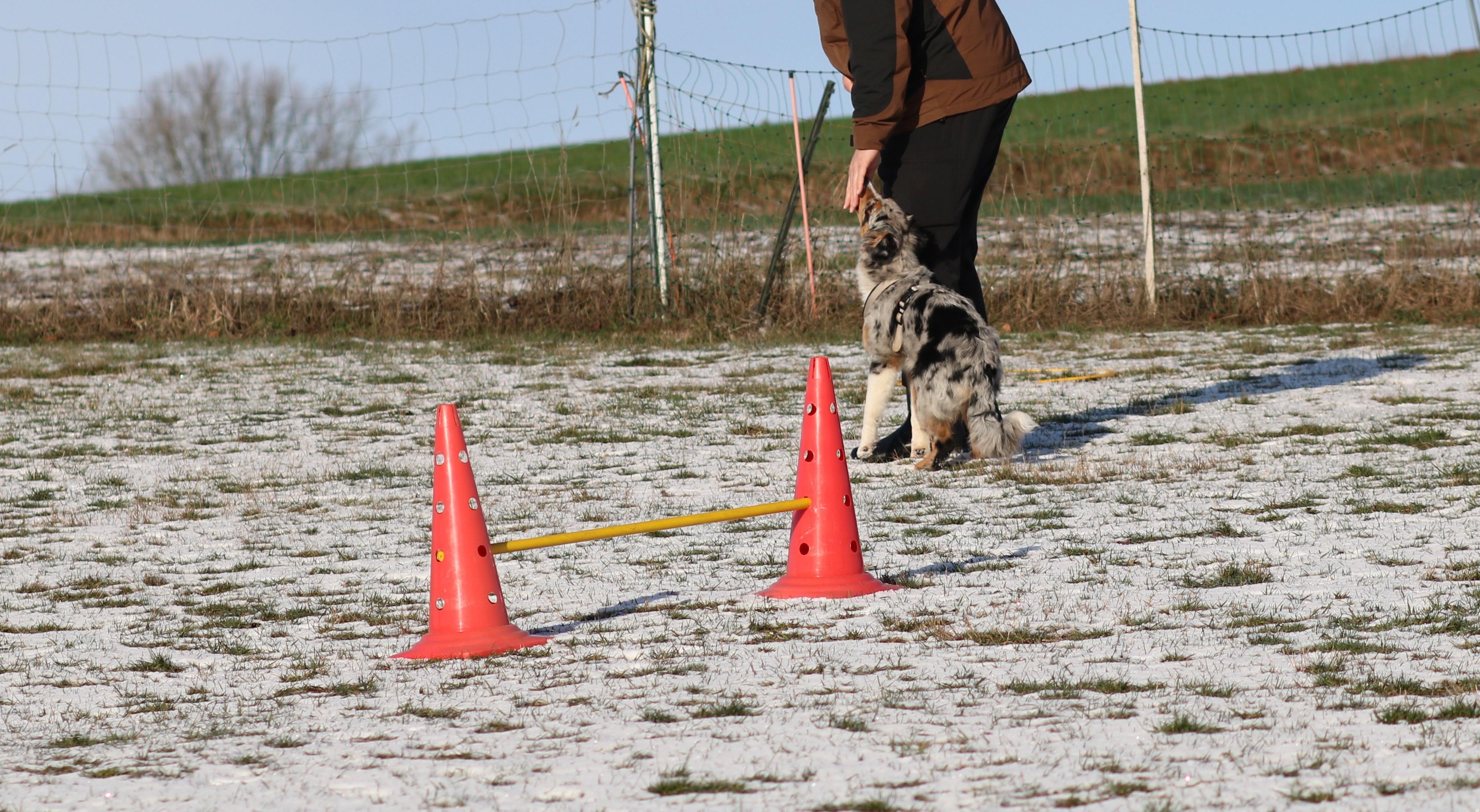 Welpenschule_tipps_Hundeblog_dogsoulmate