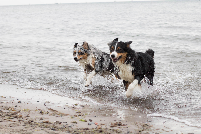 Hundeblog_dogsoulmate20191-49