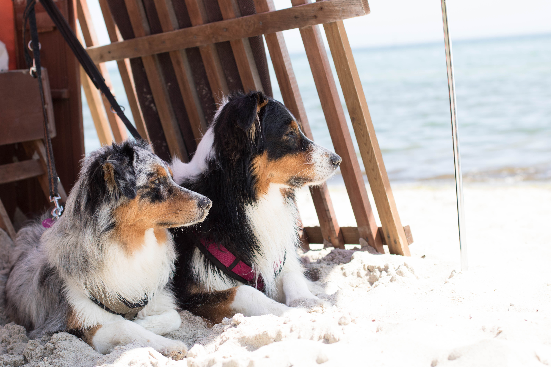 Hundeblog_dogsoulmate20191-61