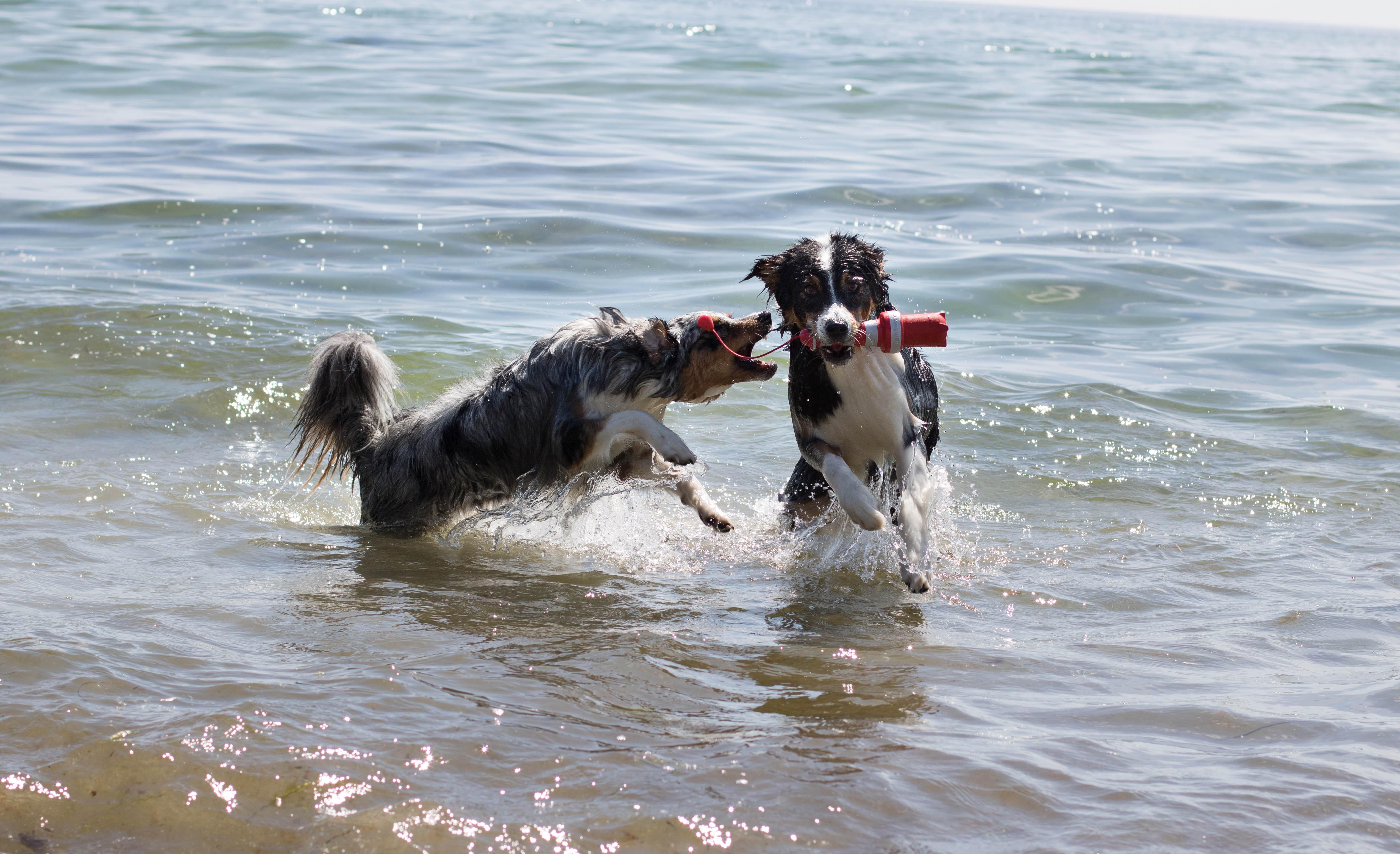 Hundestrand mit Hund