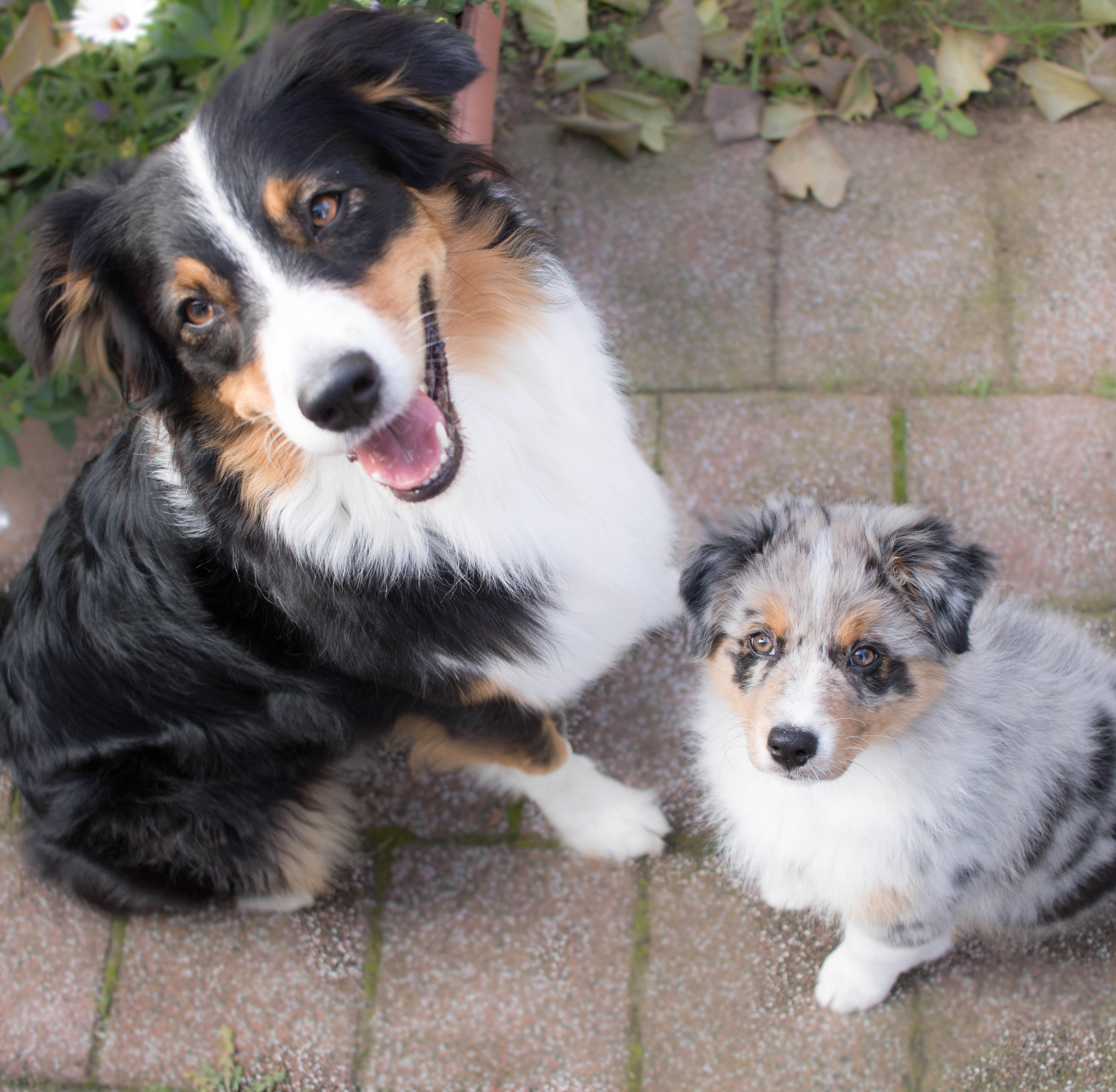 Hundeblog_zwei_hunde_umstellung_dogsoulmate20181-244