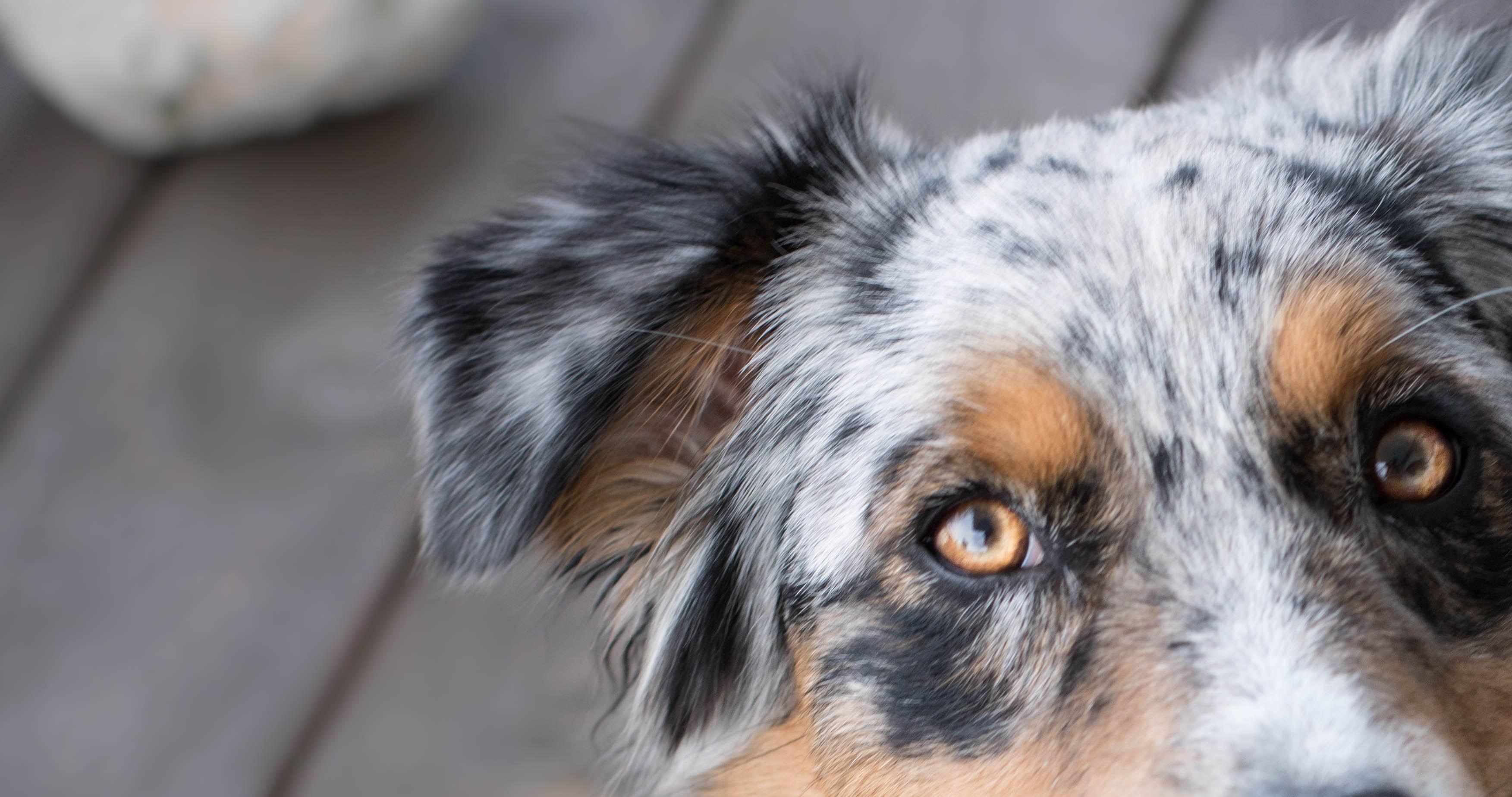 DogSoulmate_Wie_sehen_Hunde_Hundeblog