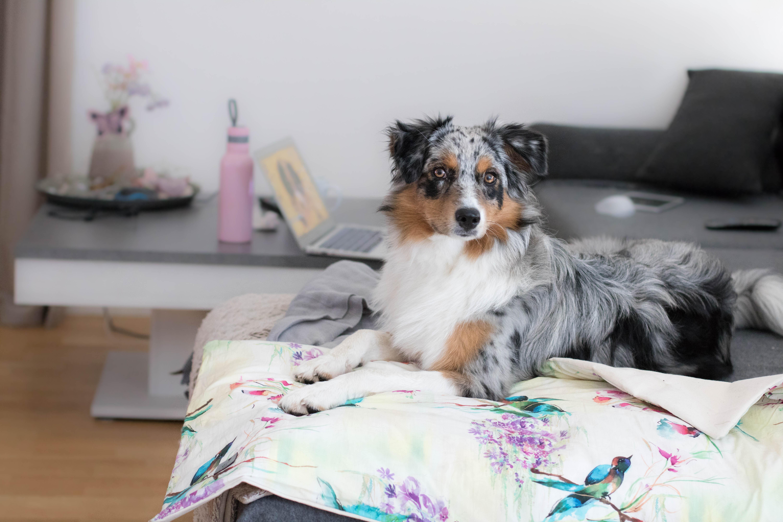 Hundeblog_dogsoulmate20191-18