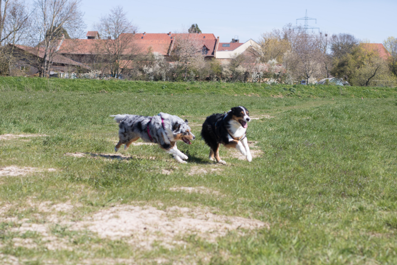 Hundeblog_dogsoulmate20201-76