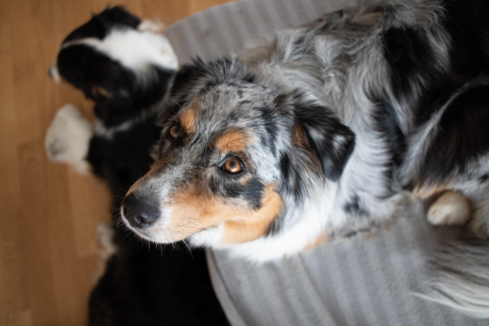 Hundeauslastung_Hundetraining_hyperaktiverHund_Blogbeitrag